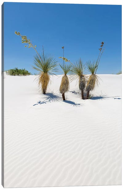 Dunes & Yucca, White Sands Canvas Art Print