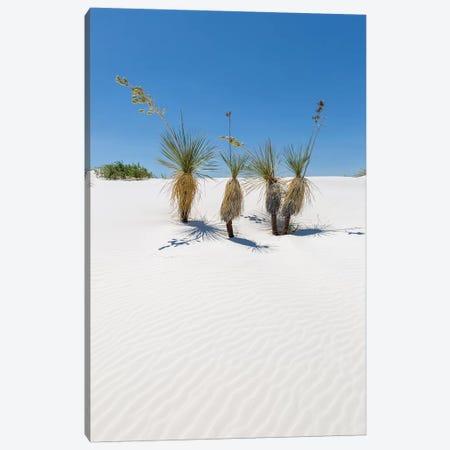 Dunes & Yucca, White Sands Canvas Print #MEV257} by Melanie Viola Canvas Artwork