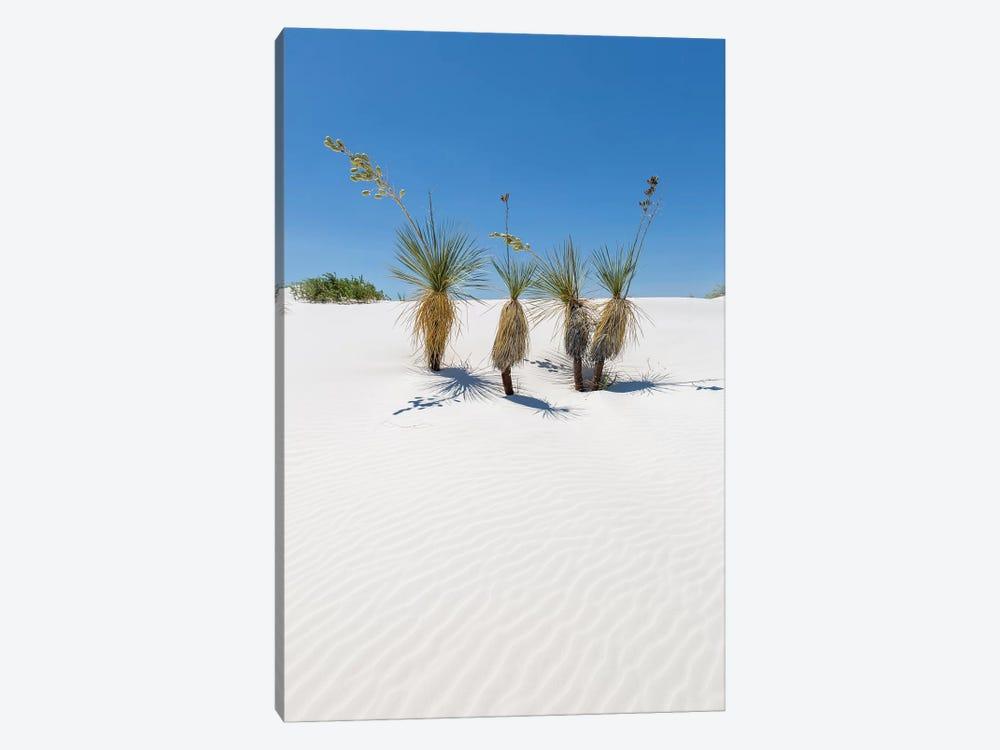 Dunes & Yucca, White Sands by Melanie Viola 1-piece Canvas Print