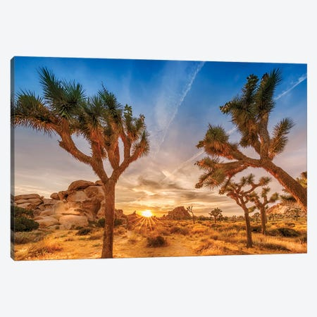 Gorgeous Sunset at Joshua Tree National Park Canvas Print #MEV260} by Melanie Viola Canvas Art