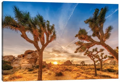 Gorgeous Sunset at Joshua Tree National Park Canvas Art Print