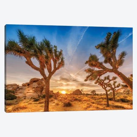 Gorgeous Sunset at Joshua Tree National Park Canvas Print #MEV260} by Melanie Viola Canvas Art