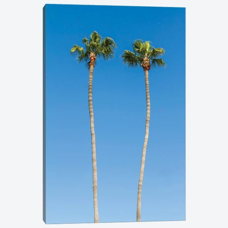 Palm Trees Canvas Print #MEV265} by Melanie Viola Art Print