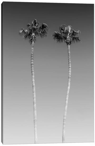 Palm Trees In Black & White Canvas Art Print