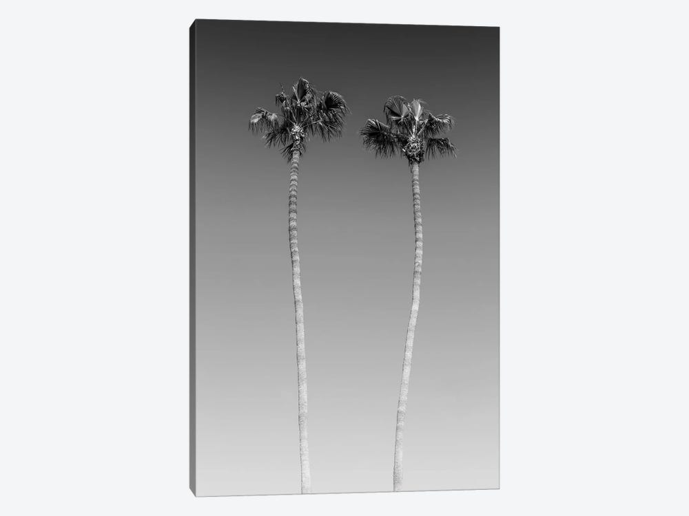 Palm Trees In Black & White by Melanie Viola 1-piece Canvas Art Print