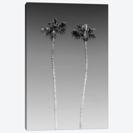 Palm Trees In Black & White Canvas Print #MEV266} by Melanie Viola Art Print