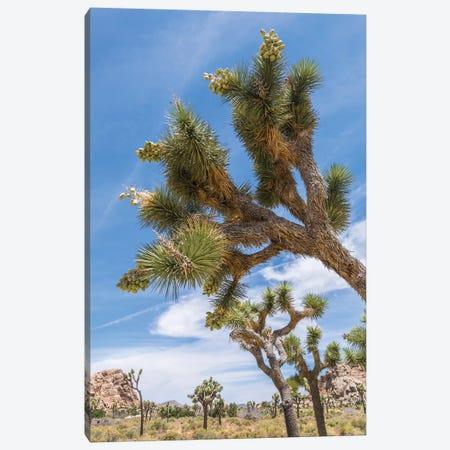 Lovely Joshua Tree National Park Canvas Print #MEV270} by Melanie Viola Canvas Print