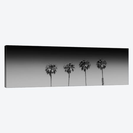 Lovely Palm Trees In Black & White Canvas Print #MEV271} by Melanie Viola Art Print