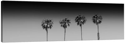 Lovely Palm Trees In Black & White Canvas Art Print
