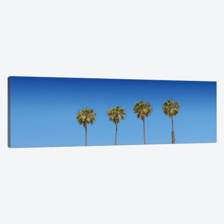 Lovely Palm Trees Canvas Print #MEV272} by Melanie Viola Art Print