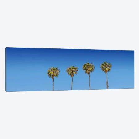 Lovely Palm Trees Canvas Print #MEV272} by Melanie Viola Art Print