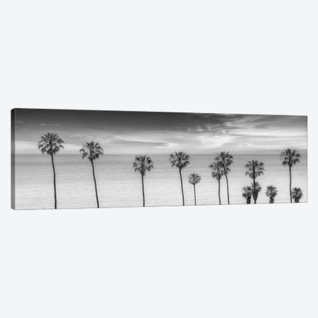 Lovely Palm Trees at the Ocean In Black & White Canvas Print #MEV274} by Melanie Viola Canvas Art