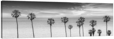 Lovely Palm Trees at the Ocean In Black & White Canvas Art Print