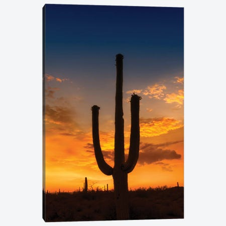 Bright Sunset At Saguaro National Park Canvas Print #MEV283} by Melanie Viola Canvas Wall Art