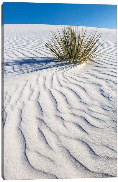 White Sands Dune Canvas Art Print