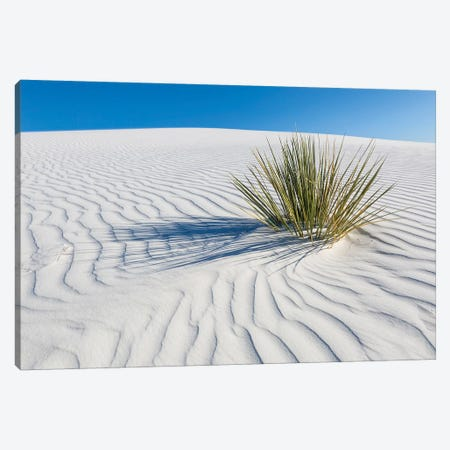 White Sands Scenery 3-Piece Canvas #MEV290} by Melanie Viola Art Print
