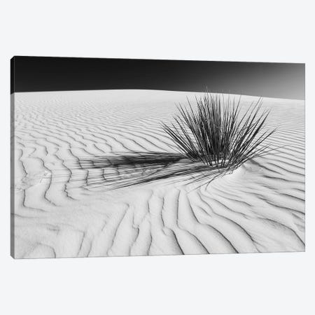 White Sands Scenery In Black & White 3-Piece Canvas #MEV291} by Melanie Viola Canvas Art Print