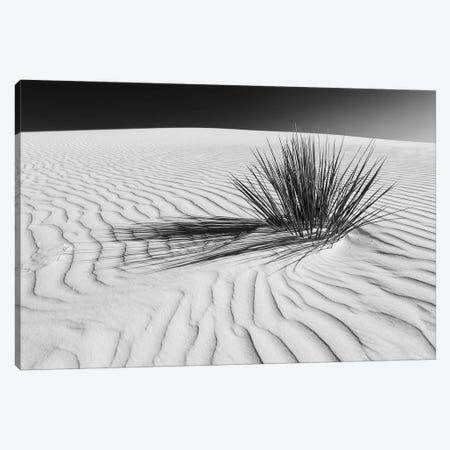 White Sands Scenery In Black & White Canvas Print #MEV291} by Melanie Viola Canvas Art Print