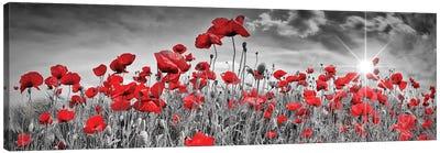 Idyllic Field Of Poppies With Sun | Panorama Canvas Art Print