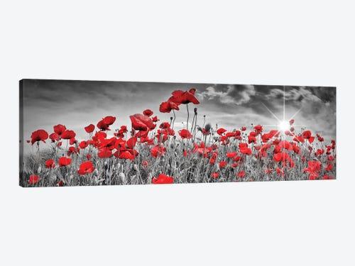 Idyllic Field Of Poppies With Sun Panorama C Melanie Viola Icanvas
