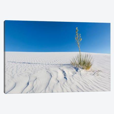 White Sands Nature Canvas Print #MEV334} by Melanie Viola Canvas Art Print