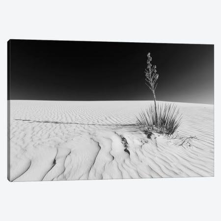White Sands Nature | Monochrome Canvas Print #MEV335} by Melanie Viola Canvas Print