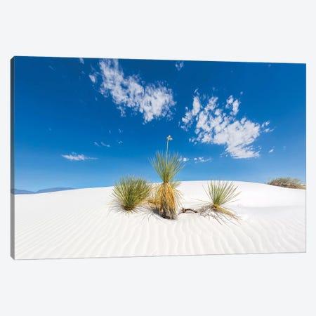 White Sands Scenery Canvas Print #MEV336} by Melanie Viola Canvas Art Print