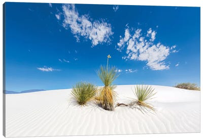 White Sands Scenery Canvas Art Print