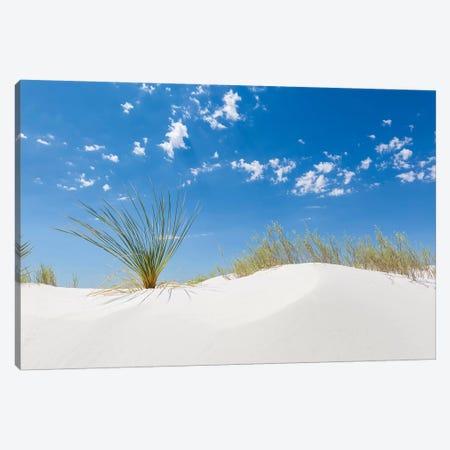 White Sands Minimalistic Canvas Print #MEV338} by Melanie Viola Canvas Artwork