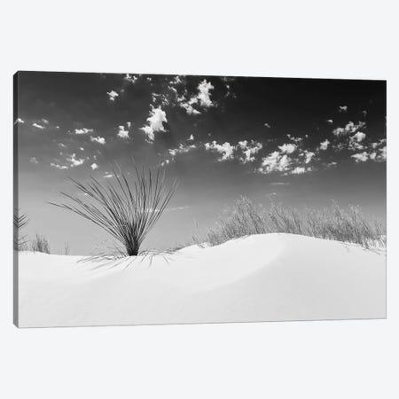 White Sands Minimalistic | Monochrome Canvas Print #MEV339} by Melanie Viola Canvas Artwork