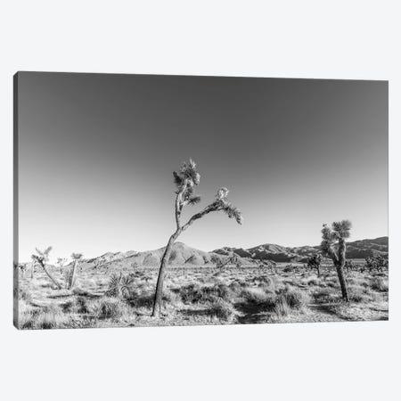 Scenic Joshua Tree National Park   Monochrome Canvas Print #MEV353} by Melanie Viola Canvas Wall Art