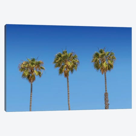 Minimalistic Palm Trees Canvas Print #MEV357} by Melanie Viola Art Print