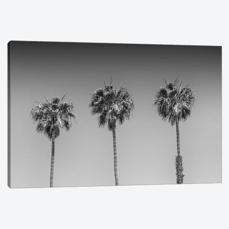 Minimalistic Palm Trees | Monochrome Canvas Print #MEV358} by Melanie Viola Canvas Artwork