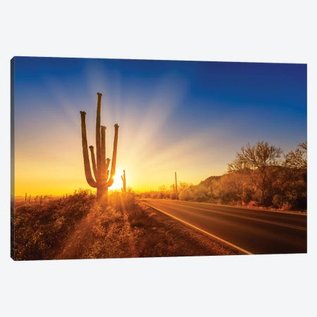 Saguaro National Park Setting Sun Canvas Print #MEV360} by Melanie Viola Canvas Art Print