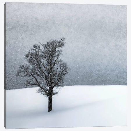 Lonely Tree Idyllic Winterlandscape Canvas Print #MEV377} by Melanie Viola Canvas Art Print
