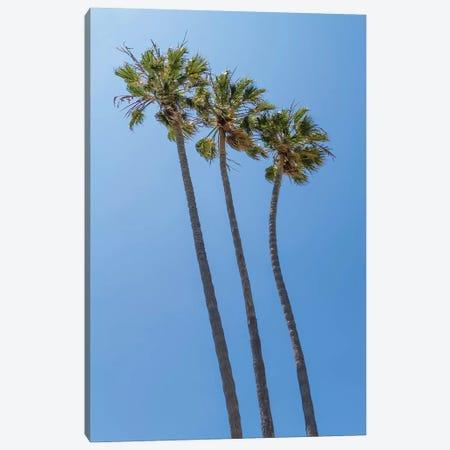 Palm Trees At The Beach Canvas Print #MEV395} by Melanie Viola Art Print