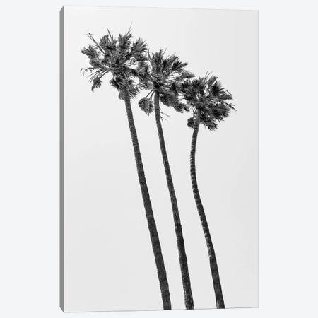 Palm Trees At The Beach | Monochrome Canvas Print #MEV396} by Melanie Viola Art Print