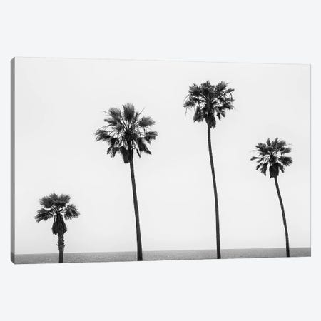 Palm Trees By The Sea   Monochrome Canvas Print #MEV398} by Melanie Viola Canvas Artwork