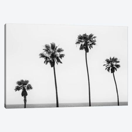 Palm Trees By The Sea | Monochrome Canvas Print #MEV398} by Melanie Viola Canvas Artwork