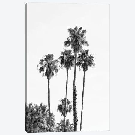Palm Trees | Monochrome Canvas Print #MEV399} by Melanie Viola Canvas Art