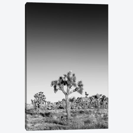 Joshua Trees Monochrome Canvas Print #MEV407} by Melanie Viola Canvas Art Print