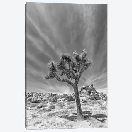 Lonely Joshua Tree Monochrome Canvas Print #MEV408} by Melanie Viola Canvas Art