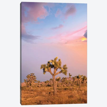 Lovely Sunset At Joshua Tree National Park Canvas Print #MEV418} by Melanie Viola Canvas Art Print