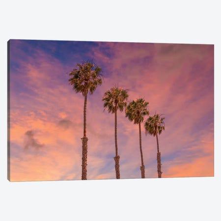 Palm Trees - Idyllic Sunset Canvas Print #MEV425} by Melanie Viola Canvas Art Print