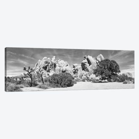 Life Oak - Joshua Tree National Park Monochrome Panorama Canvas Print #MEV428} by Melanie Viola Canvas Wall Art