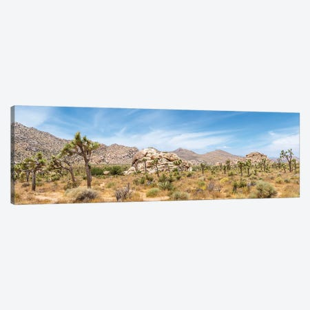 Scenic Panorama - Joshua Tree National Park Canvas Print #MEV429} by Melanie Viola Canvas Wall Art
