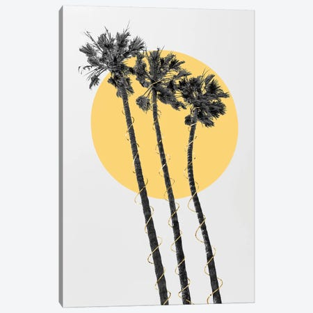 Palm Trees In The Sun Canvas Print #MEV474} by Melanie Viola Canvas Wall Art