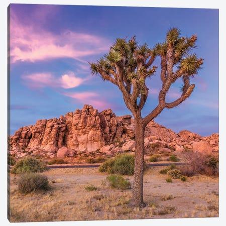 Joshua Tree Evening Scenery Canvas Print #MEV509} by Melanie Viola Art Print