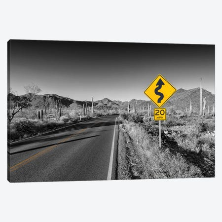 Saguaro National Park Bajada Loop Drive Canvas Print #MEV521} by Melanie Viola Canvas Print