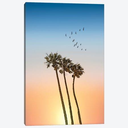 Palm Trees At Sunset Canvas Print #MEV522} by Melanie Viola Art Print
